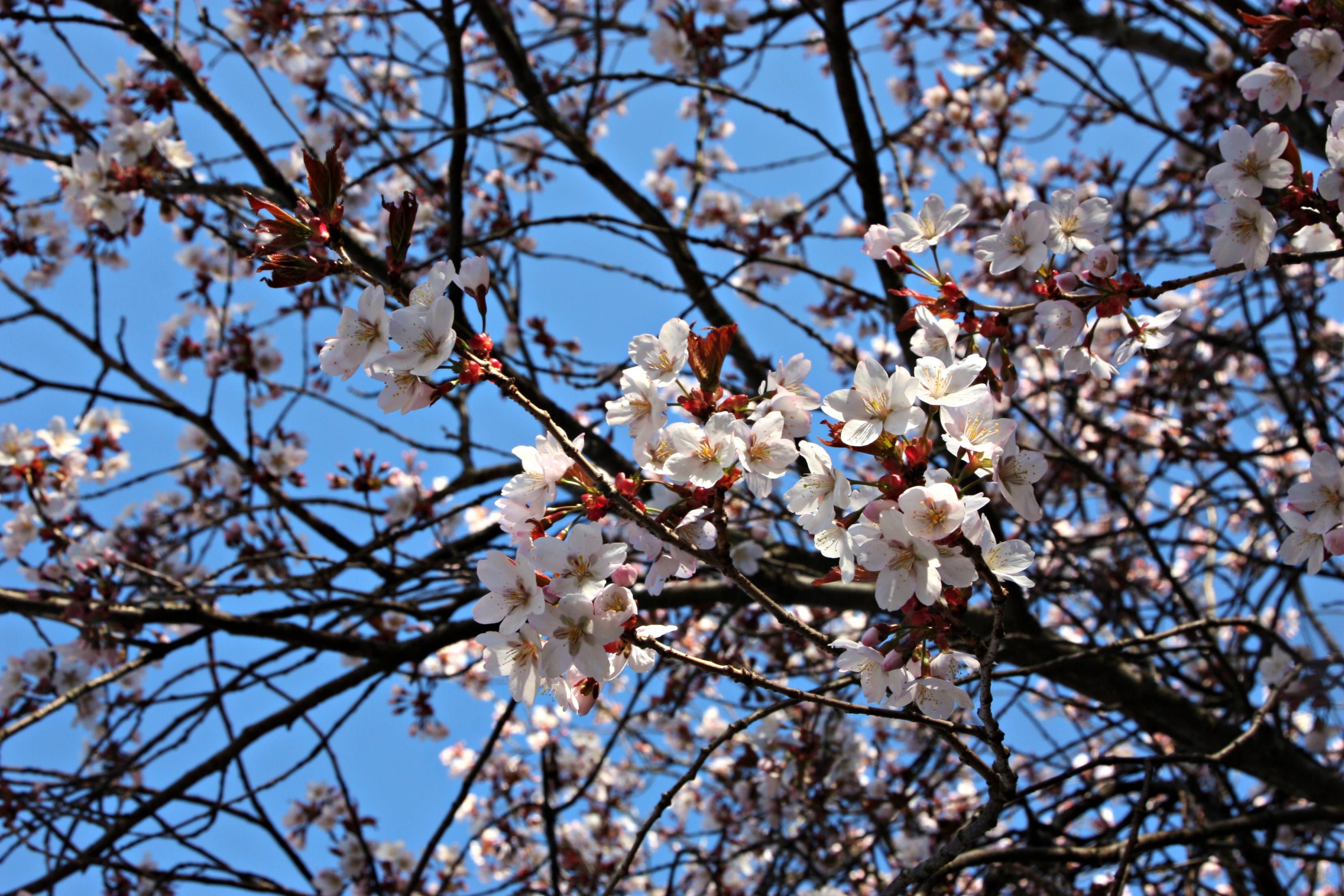 spring | Sinikka\'s snippets